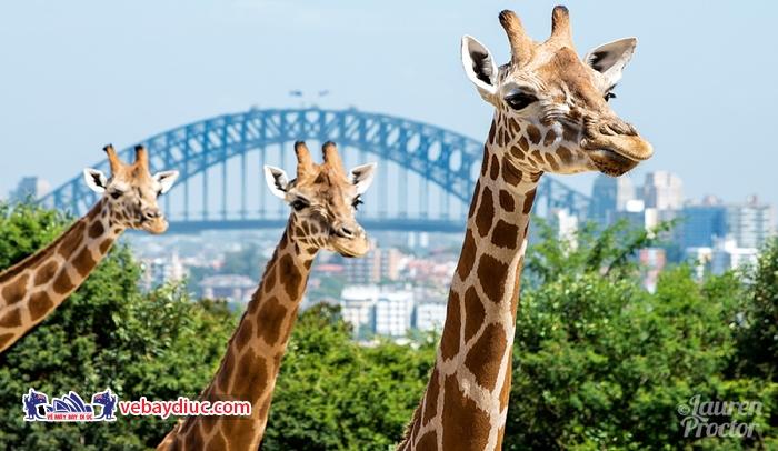 Vườn thú Taronga