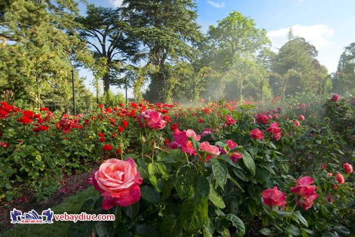 Vườn thực vật Botany Bounty