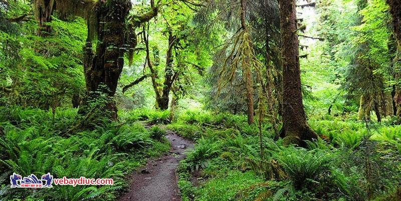 Thảm thực vật xanh tốt là điểm thu hút khách tham quan đến rừng mưa nhiệt đới