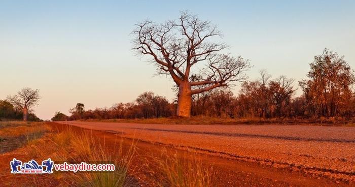 Đường Gibb Rive Road vĩ đại nhất nước Úc